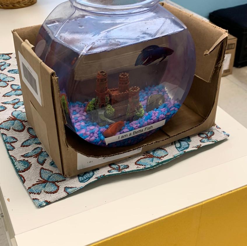 Fishy likes Box Week!