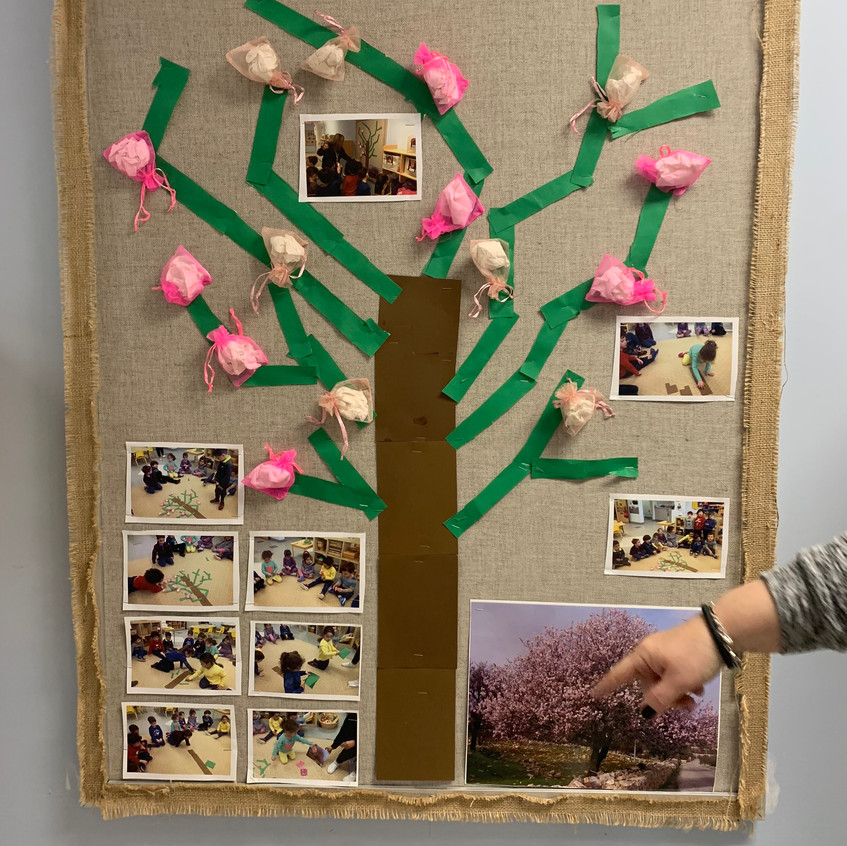 Hashkedia Tree