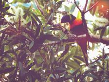 19-04_Parrot_Web.jpg
