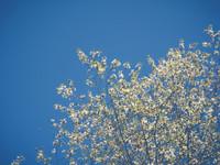 20-04_Blossom_Web.jpg