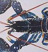 Mathurin Méheut, le homard
