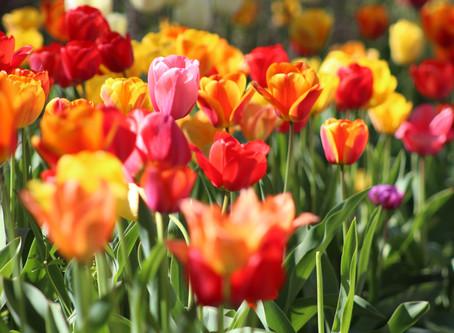 """Выставка тюльпанов """"Мечты о весне"""""""
