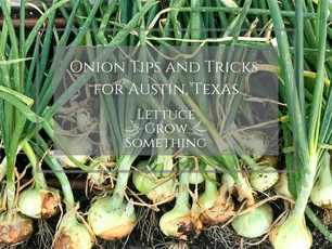 Tips & Tricks for Growing Onions: Austin Area