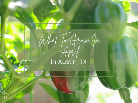 What to Grow in April in Austin, TX