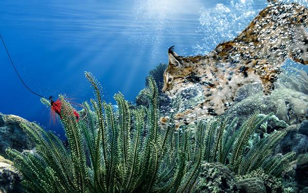 diving-cat6.jpg