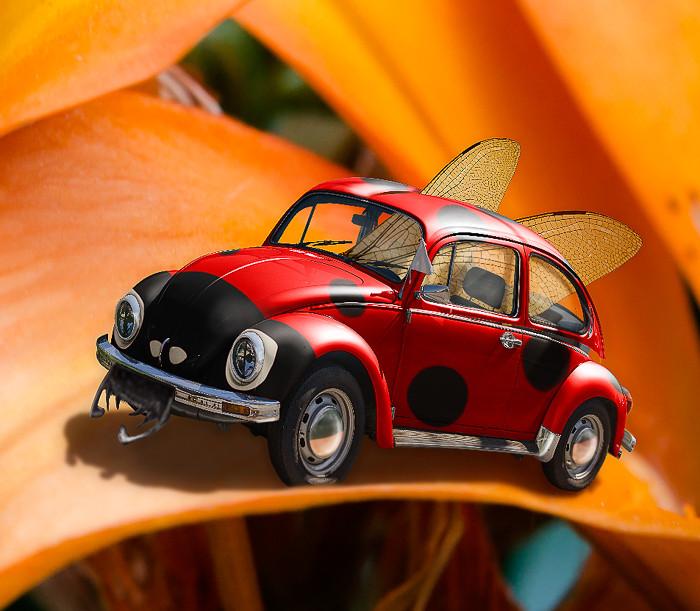 The Ladybug-2.jpg