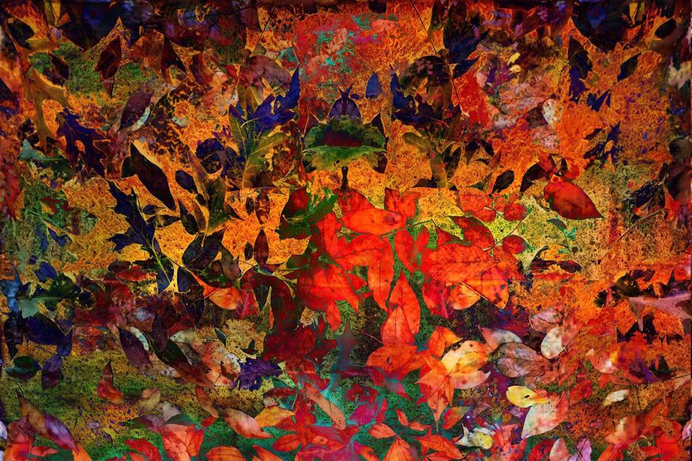 Vibrant Fall