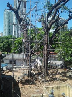 100' Tree Removals - Worldwide