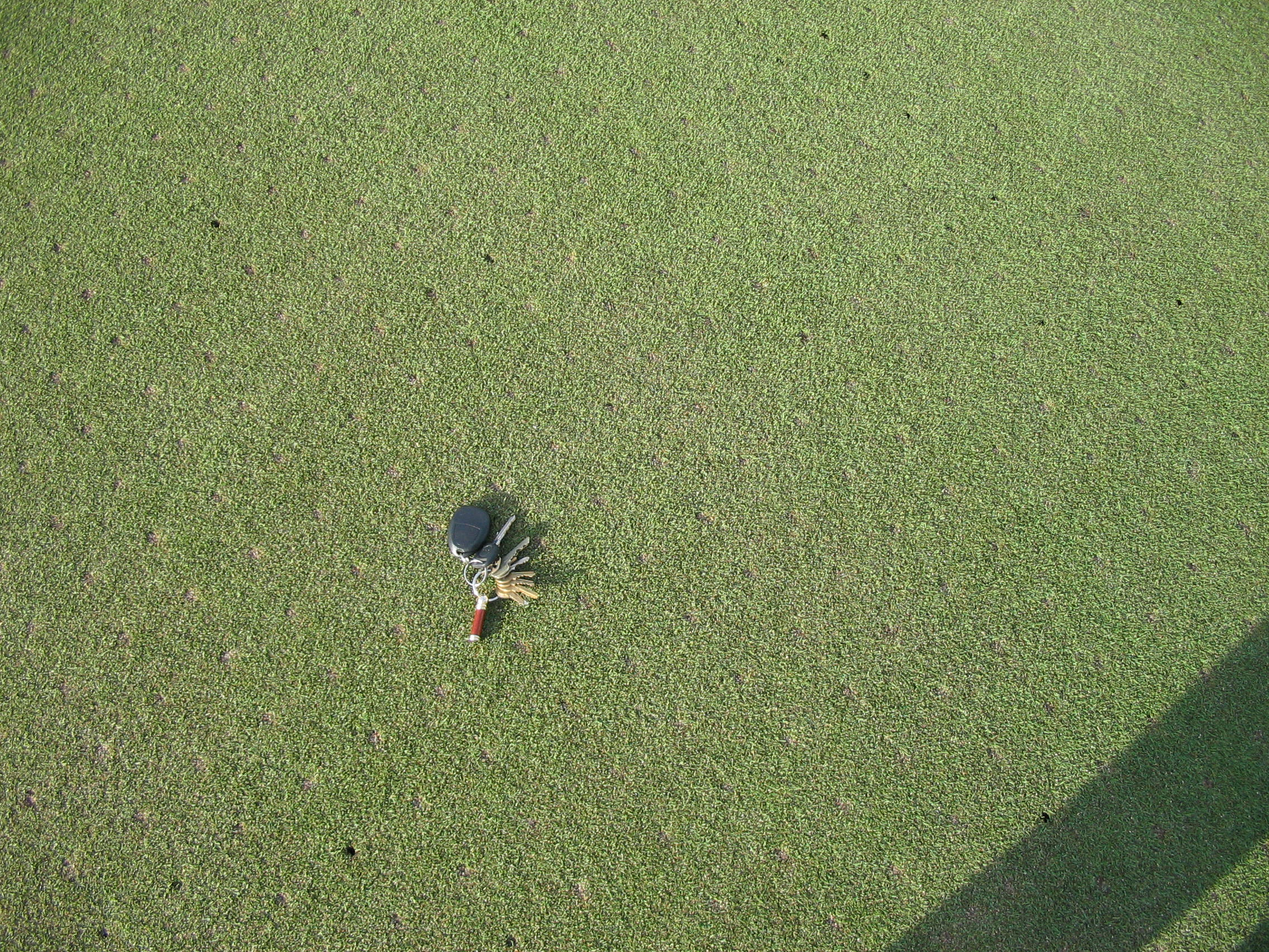 Putting Green Aerification