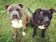Two Dogs - Private training page.jpg