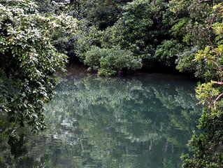 今日のユツン川