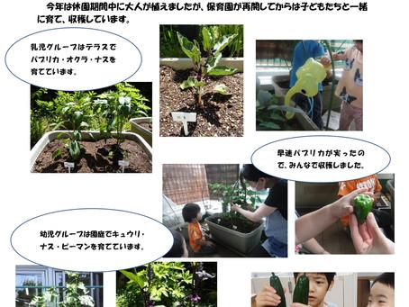 7月 夏野菜