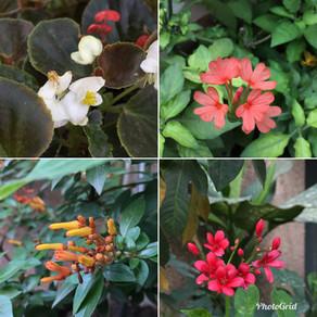 Gardening in an Indian Summer