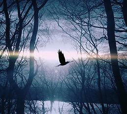 bird-dark-lake-53989.jpg