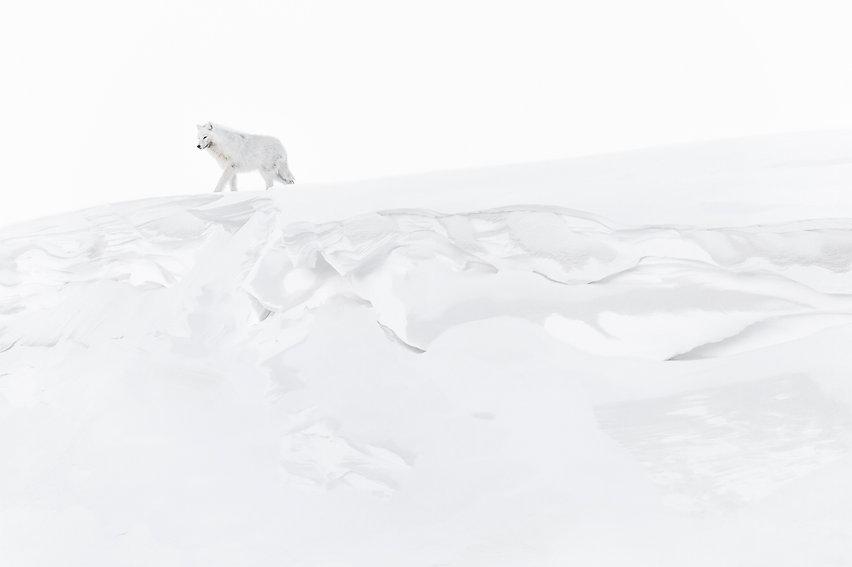 © Photo Vincent MUNIER Arctique - Dans l