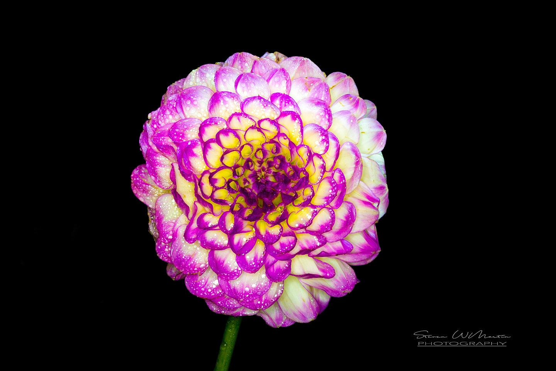 Steven w martin steve martin flower mightylinksfo Images