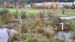 Teichsysteme mit Vogelabwehr