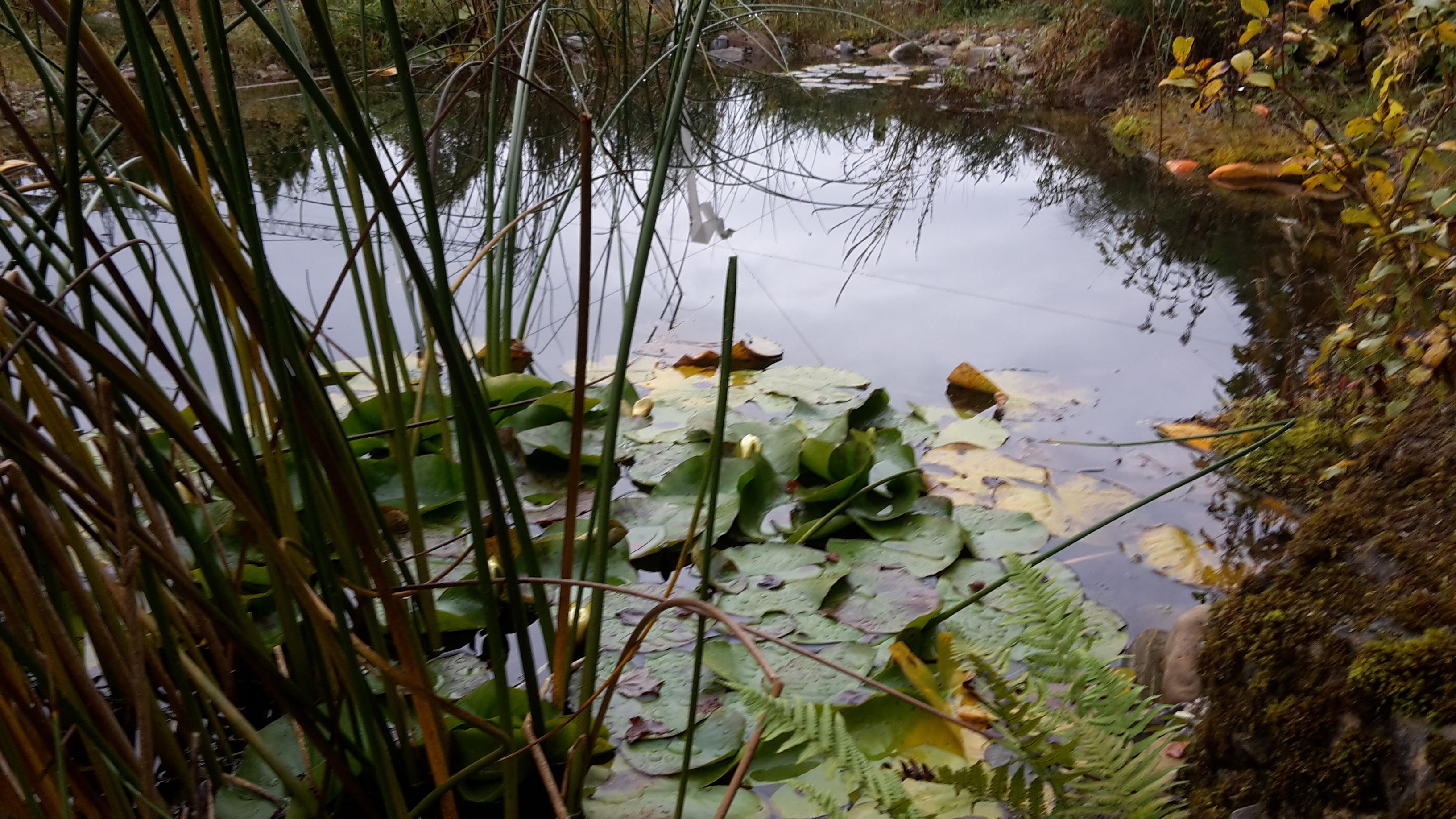 Tümpel mit Wasserpflanzen