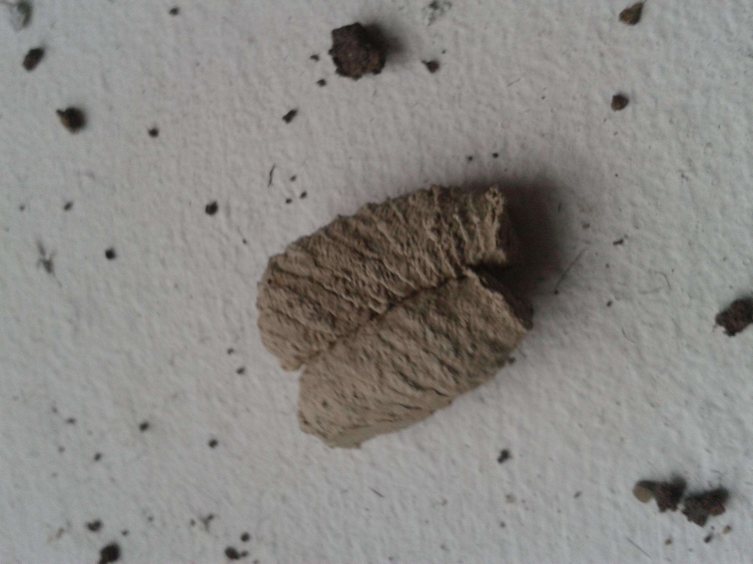 Wildbienennester aus Lehm uns Sand