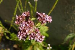 Blüten_am_Teich_4