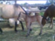 Linda's Cowboy F1959 2012