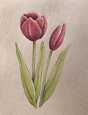 May 16th - Tulips.jpg