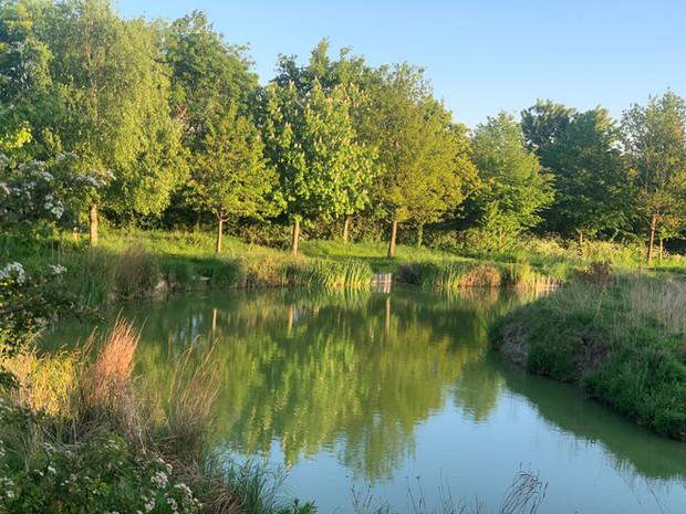 Yasi's Lake