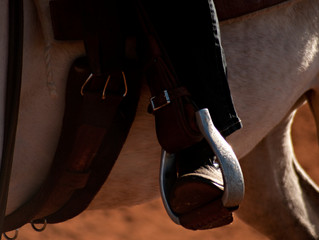 Do horses remember?