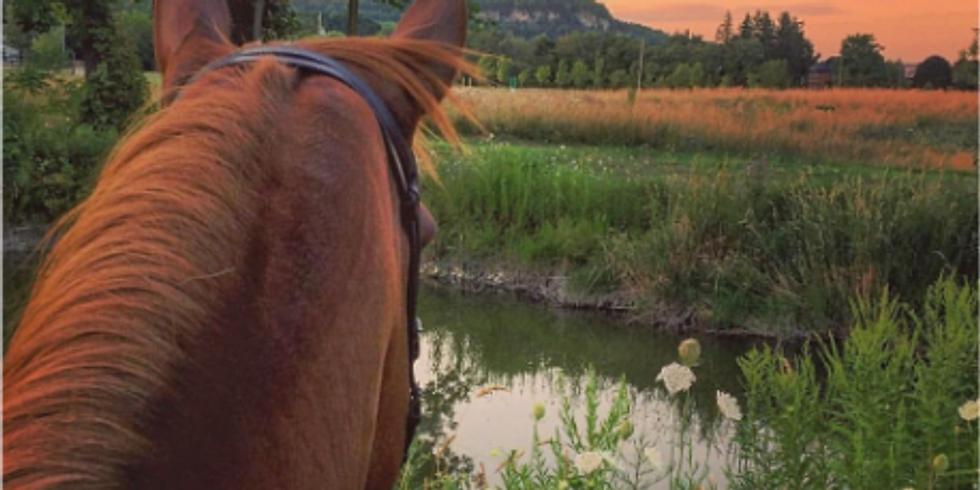 Horseback Walk Out