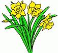 Daffodil 1b.png