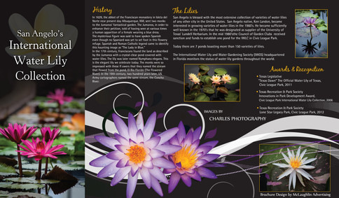 WATER LILY BROCHURE
