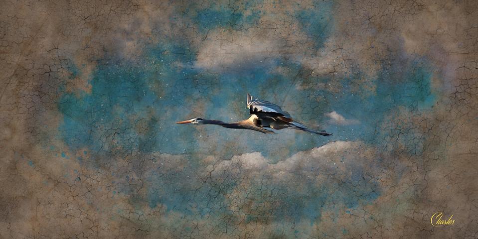HERON IN FLIGHT_0101_CLOUDS_VINTAGESKETC