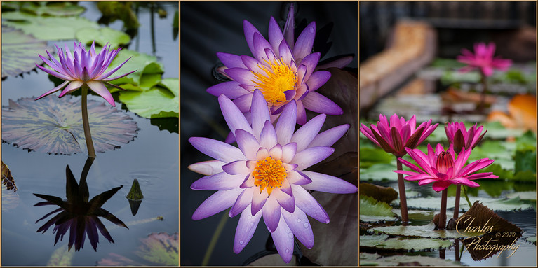 WATER LILY TRYPTIC.jpg