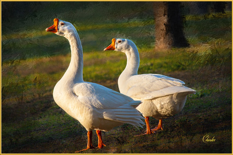GEESE_0353_ABSTRACT1.jpg