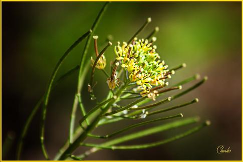 ALLEY FLOWER_0075_FOR WEBSITE.jpg