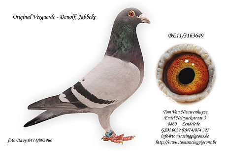 649-11 Vergaerde - Denolf.jpg
