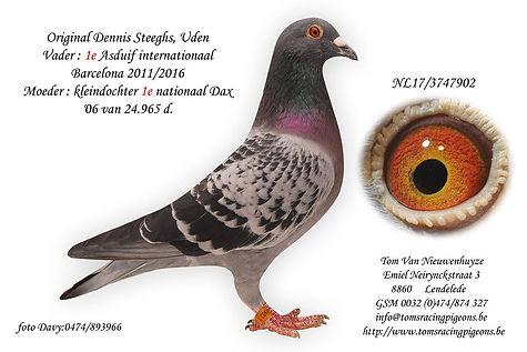902-17 Dennis Steeghs.jpg