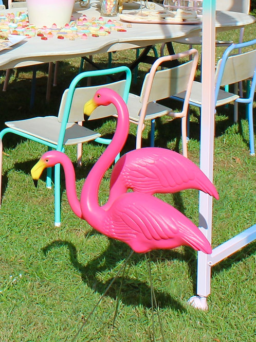 Pink Flamingoes
