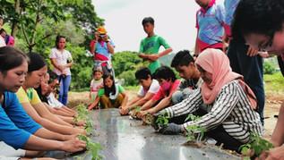 Cultivar en la Agua: a Hydroponics Sustainable Way to Gardening