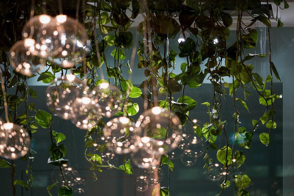 Rostlina v podhledu