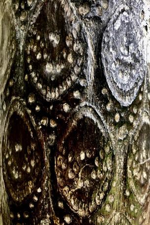 Ojos de bosque