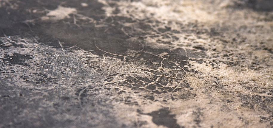 piso de flora con huellas de fractales.j