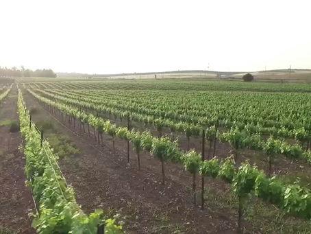 İsrail'de Tarım ve Tarım Teknolojisi