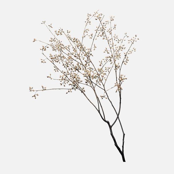 dry-flower-branch-off-white.jpg