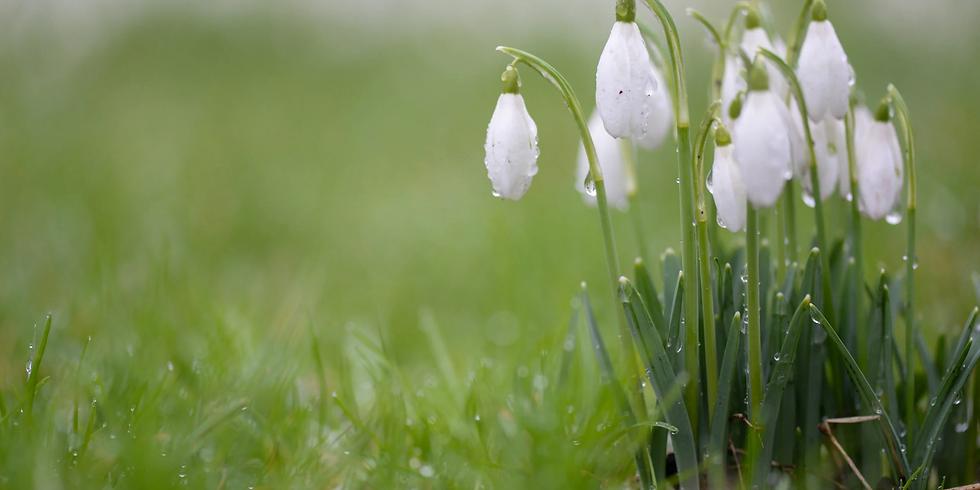 Virtual: Spring Equinox Ceremonial Journey