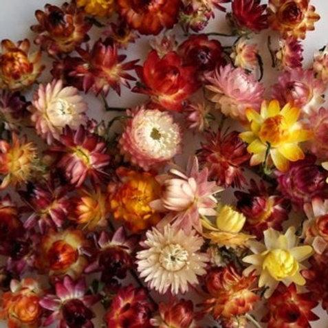 Strawflower/Helichrysum 2oz Bag