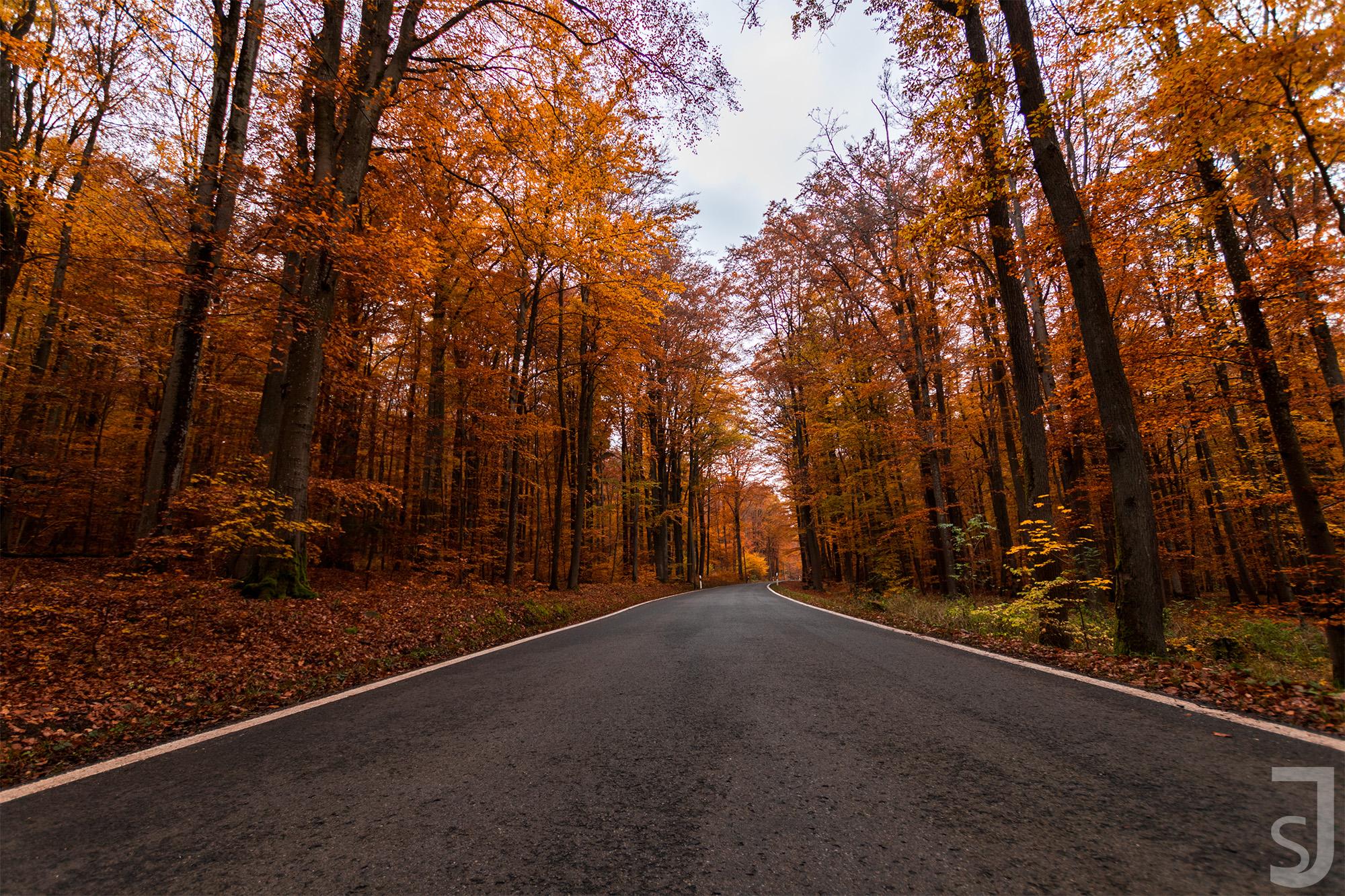 Waldstraße im Herbst (mittig), Rhön