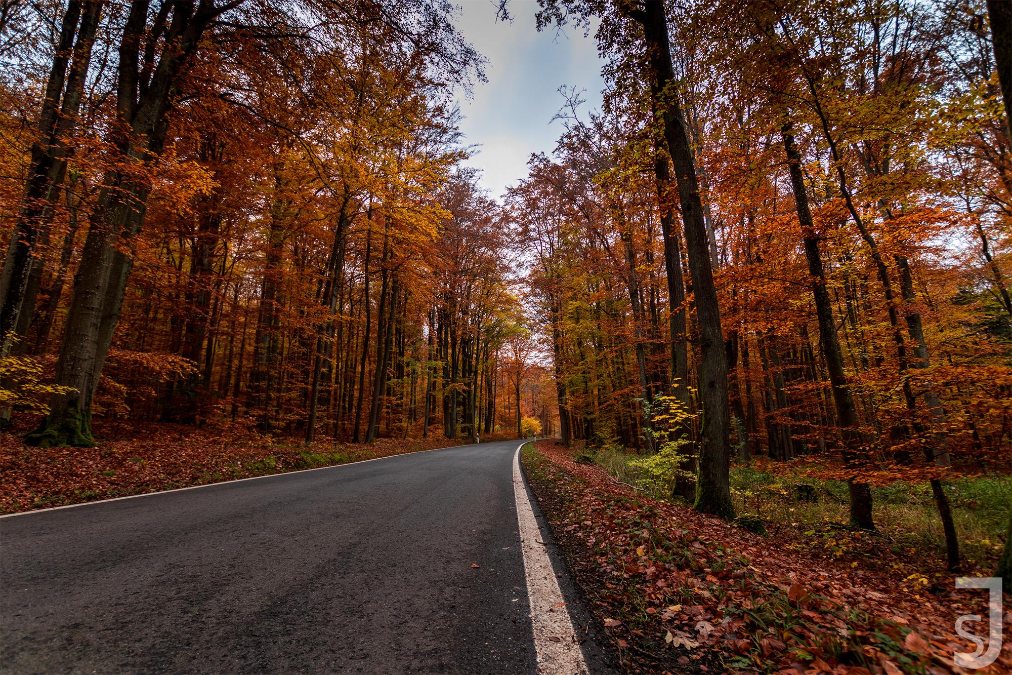 Waldstraße_im_Herbst_(Streifen),_Rhön