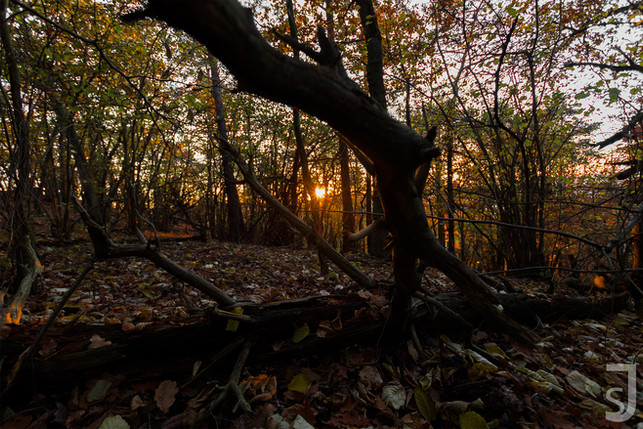 Wäldlicher Sonnenuntergang