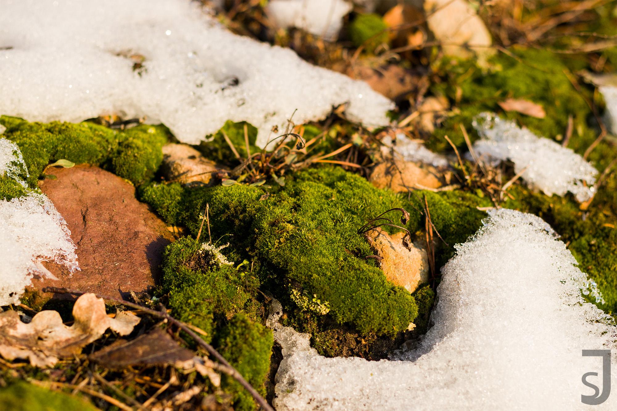 gefrorener Waldboden (Moos)